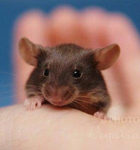 Мышки сатиновые