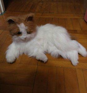 Игрушка интерактивная кошка Лулу