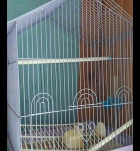Попугай с клетком