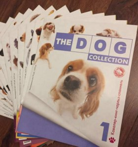 THE DOG collection