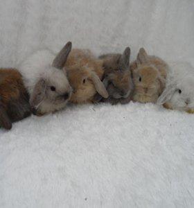 Кролики и все необходимое