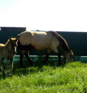 Лошадь с жерибенком