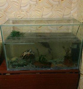 Красноухие черепахи + аквариум