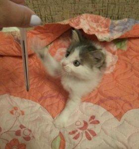 Котенок в добрые ручки