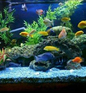 Продажа аквариумов, рыбок, растений