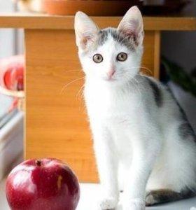 Ласковый молоденький котик