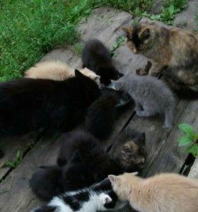 Котята ручные.