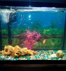 Аквариум 90 литров с рыбками и кормом