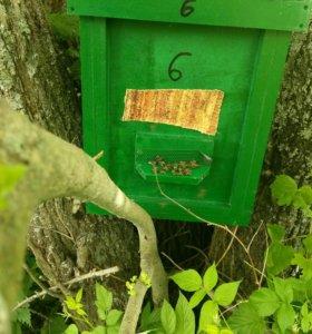 Пчелы, пчелосемьи,пчелопакеты,пчеломатки