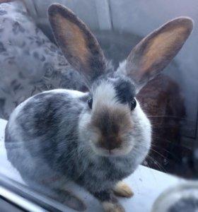 Крольчиха карликовая в продаже вместе с клеткой