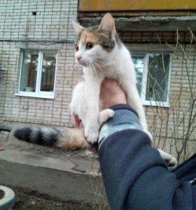 кошка-подросток