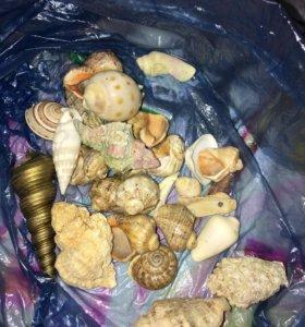 Камни/ракушки в аквариум