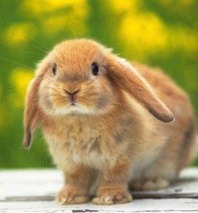 Мульча от кроликов.