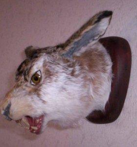 Дикий зверь из дикого леса ))) Заяц.