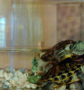 Черепахи+ 2 аквариума +фильтор