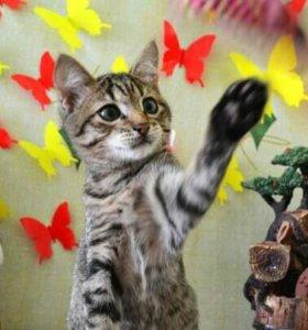 Котенок Вася в добрые руки