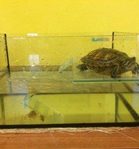 Красноухая черепаха+аквариум