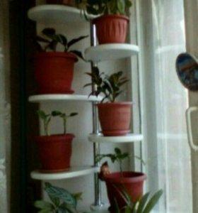 Стойка распорная для комнатных растений