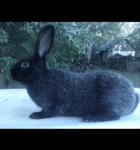 Мясо кролика, и кролики живьем.