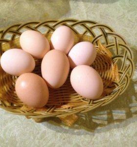 Яйцо домашние куриное