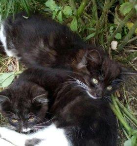 Котятки умненькие ,кушают все,очень красивые,мальч