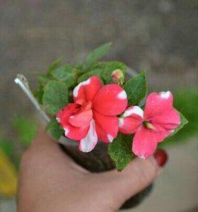 Красиво -цветущие растения