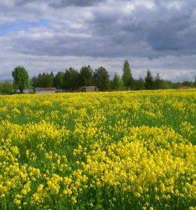 Участок, от 15 до 30 сот., сельхоз (снт или днп)