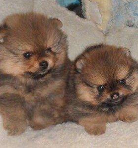 Миленькие щеночки