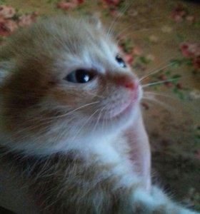 Котят