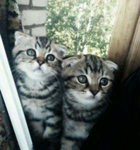 Клубные котята с документами