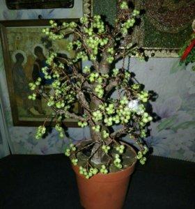 Денежное дерева