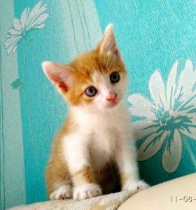 Милые , рыжие котятки