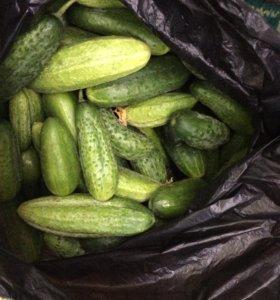 Огурцы цена за 1 кг