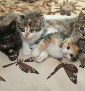 Замурчательные котятки