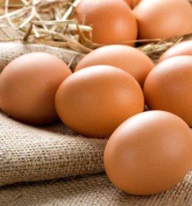 Яйца домашние(куриные) 🥚🥚