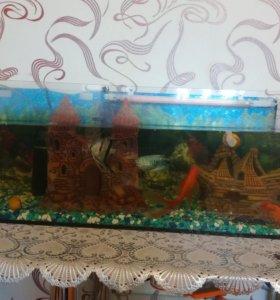 Аквариум с рыбками и .....