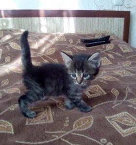 Кошечки 1 месяц