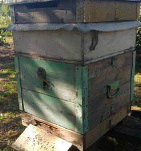 Продаю Пчелиные ульи