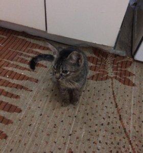 Кот хороший милый игривый
