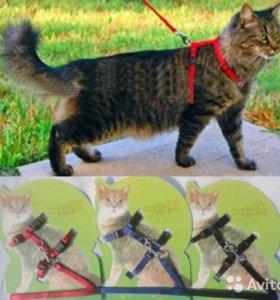 Поводок для кошек