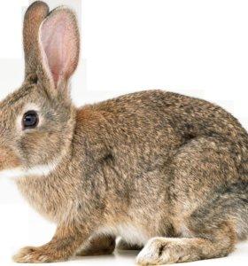Кролики!