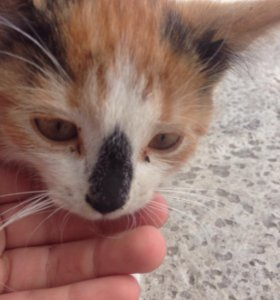 Отдам котёнка даром