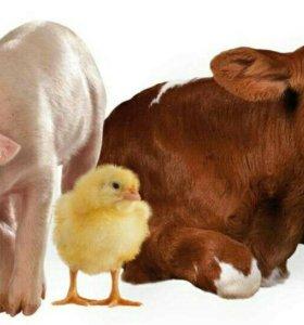 Корма для с/х животных