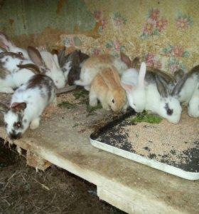 Продаю кроликов от трёх штук по 500руб