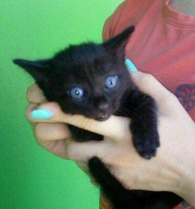 Кошечки в добрые руки