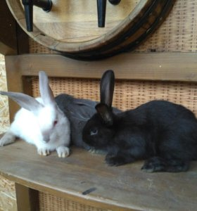 Кролики 4 месяца