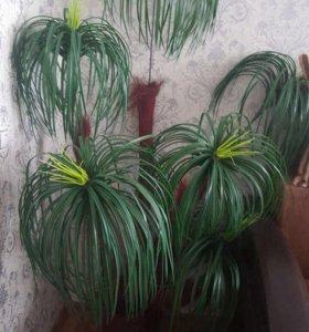 Искусственное дерево-пальма