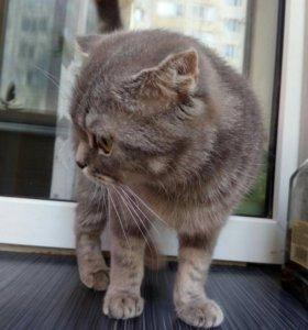 Срочно продается кошка или отдадим в хорошие руки