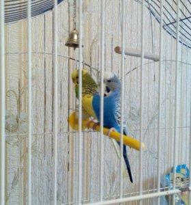 Попугаи Симферополь