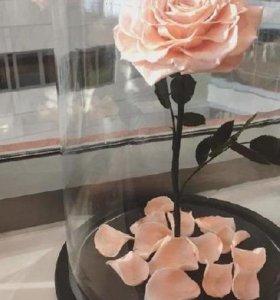 Многолетная роза в стеклянной колбе на подставке